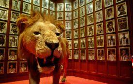 ¿Por qué los jugadores (y aficionados) del Athletic Club son conocidos como 'leones'?